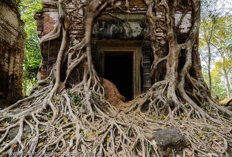 Foto Akar Pohon Menembus Dinding Beton 13