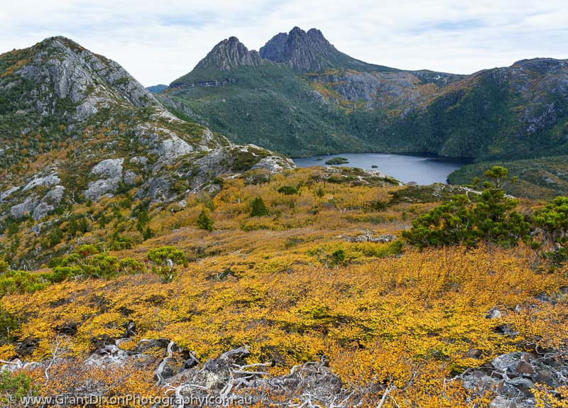 image of Cradle Mtn fagus 2