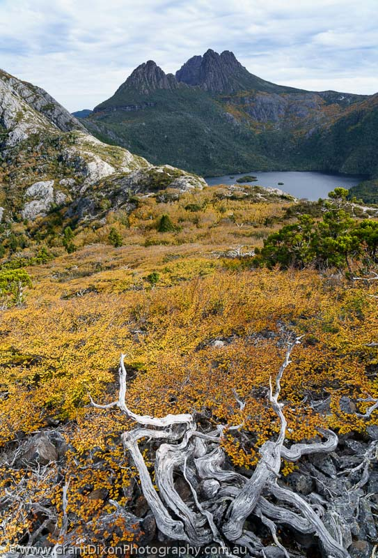 image of Cradle Mtn fagus 3