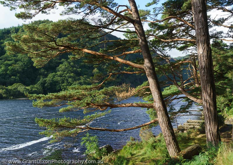 image of Glendalough Scots Pines