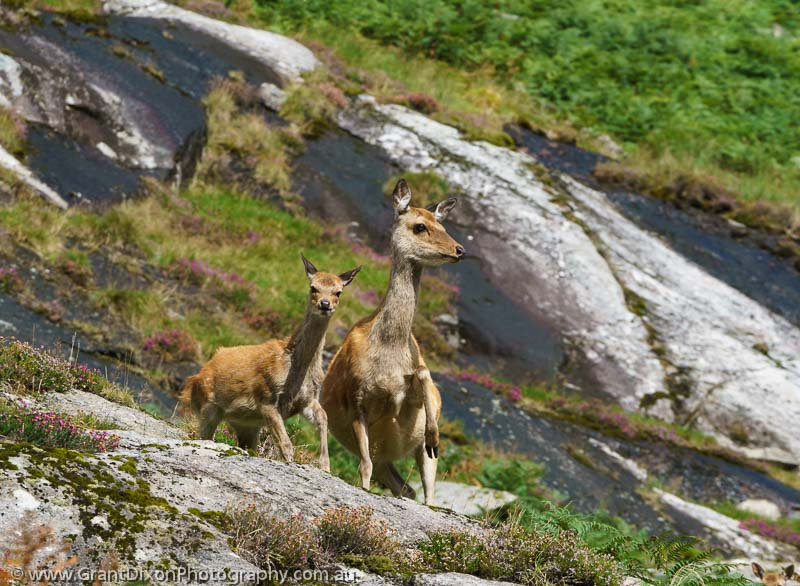 image of Glendalough deer
