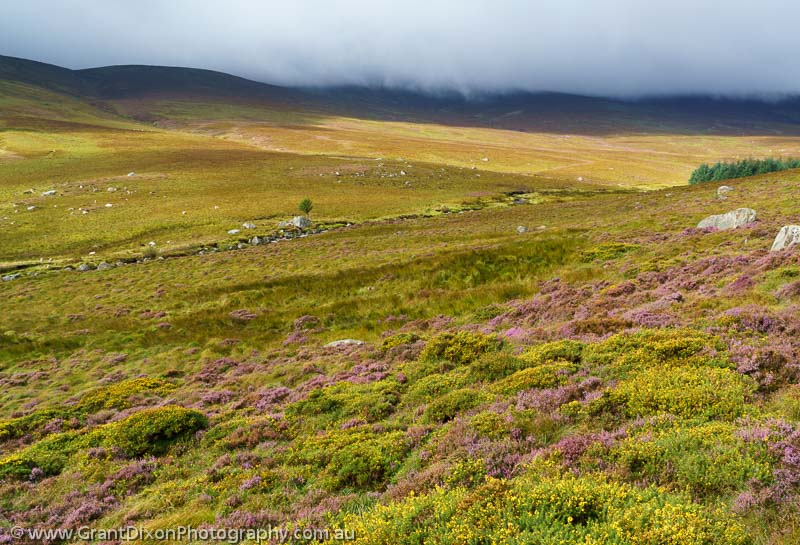 image of Wicklow heathland