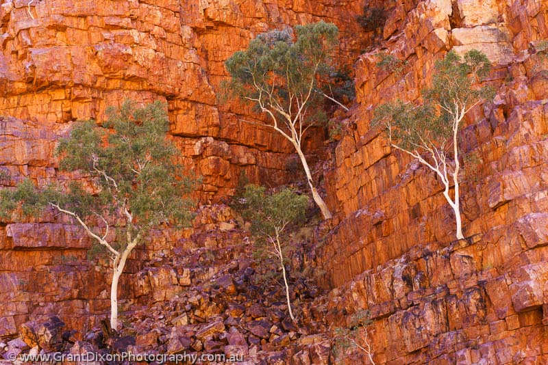 image of Ormiston Gorge Ghost Gums