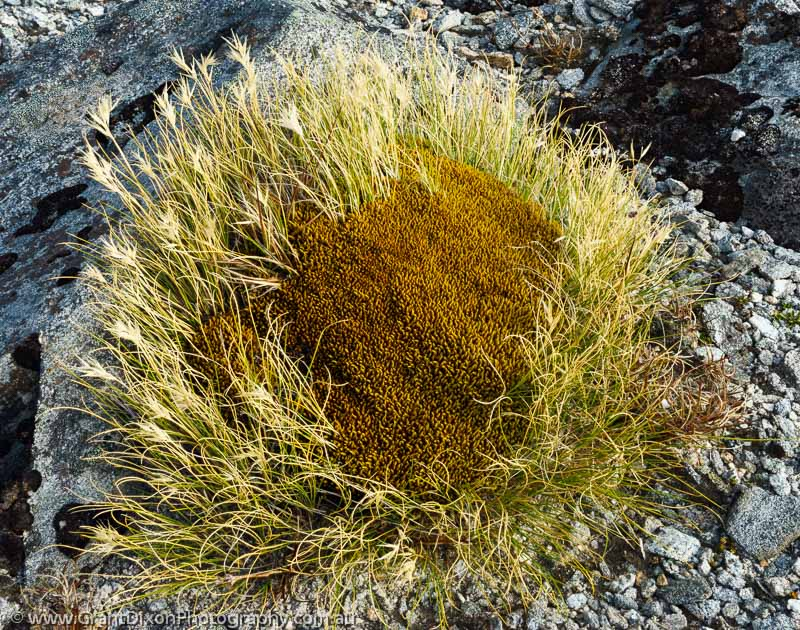 image of Grassy cushion