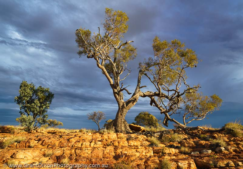 image of Watarrka skyline tree
