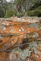 AUSTRALIA, NSW, Katoomba, Blue Mountains National Park. Lichen covered sandstone, with protruding ironstone bands, near Leura, Greater Blue Mountains World Heritage Area.