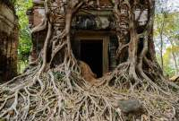 CAMBODIA, Siem Reap. Doorway at Prasat Bram temple, several brick towers enclosed by tree roots, part of 10th century Ankorian site at Koh Ker.