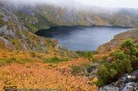 AUSTRALIA, Tasmania, Cradle Mountain - Lake St Clair National Park. Endemic Deciduous Beech (Nothofagus gunnii) in autumn, Crater Lake (a glacial cirque), Overland Track.