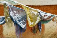 NEPAL, Dolpo. Tibetan (Buddhist) prayer flags at Shey Gompa in snow.