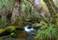 Pine Valley, Du Cane Range, Cradle Mountain - Lk St Clair National Park, Tasmanian Wilderness World Heritage Area.