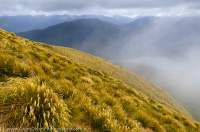 NEW ZEALAND, Fiordland National Park. Snowgrass tops, Dark Cloud Range.