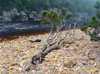 Lower Franklin River, Franklin-Gordon Wild Rivers National Park, Tasmanian Wilderness World Heritage Area.