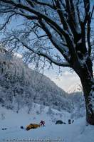 INDIA, Uttaranchal, Govind National Park. Winter camp in birch and conifer forest, Rupin valley.