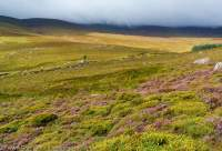 Heather and peatland, Wicklow Mountains, County Wicklow, Ireland.