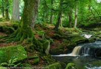 Woodland cascade, Wicklow Mountains, County Wicklow, Ireland.