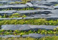 Grikes (fissues) in limestone pavement, Inis Meain, Aran Islands, County Galway, Ireland