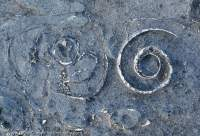 Fossils in Devonian limestone, Inis Meain, Aran Islands, County Galway, Ireland