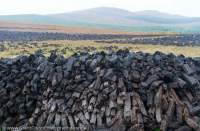 Peat stacked to dry after harvesting (mining), Connemara, County Galway, Ireland