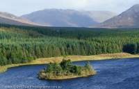 Lake and conifer plantation, Connemara, County Galway, Ireland