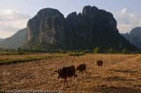 LAOS, Vientiane, Vang Vieng. Limestone karst peak rises beyond dry rice field, Nam Song river valley.