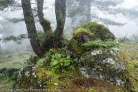Cloud forest, Tsum Valley, Manaslu Circuit trek, Nepal