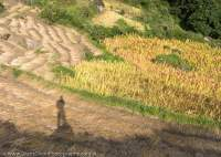 Shadow on harvested fields, Tsum Valley, Manaslu Circuit trek, Nepal