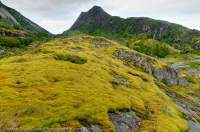 NORWAY, Nordland. Hinnoya. Moss coaked rock outcrops, smoothed by glacial ice, Arsteinen.