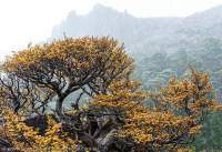 Mt Olympus, Cradle Mtn - Lk St Clair National Park, Tasmanian Wilderness World Heritage Area.
