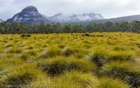 Buttongrass plain and Mt Ossa, Cradle Mountain - Lake St Clair National Park, Tasmanian Wilderness World Heritage Area.