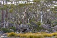 Walls of Jerusalem National Park, Tasmania.