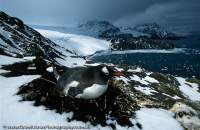 South Georgia, sub-antarctic island, South Atlantic Ocean