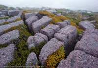 Joints in conglomerate pavement, Tyndall Range, Tasmania, Australia.