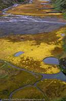 ARGENTINA, Tierra del Fuego, Ushuaia. Sphagnum, pools & braided stream, near Laguna Superior.