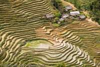 VIETNAM, Northwest Highlands, Sapa. Terraced fields in Ta Van valley, below Sapa.