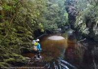 Livingston Rivulet, Tasmanian Wilderness World Heritage Area